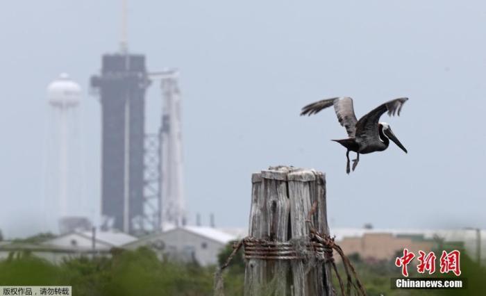 当地时间5月25日,美国佛罗里达州肯尼迪航天中心,paceX的载人飞行任务DEMO-2发射前准备工作进行中。上一次由美国本土出发的载人航天飞行还是在2011年7月,NASA的亚特兰蒂斯号(Atlantis)航天飞机搭载了四名宇航员从佛罗里达发射至国际空间站。