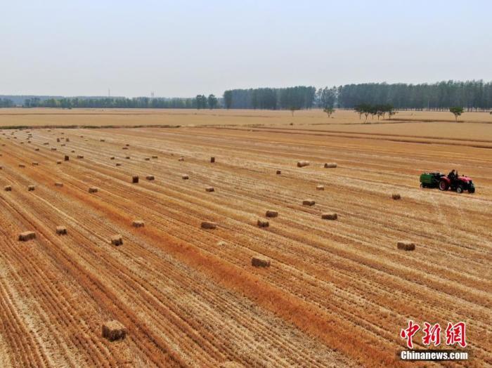 农业农村部:国内终端粮油产品市场供给持续充裕