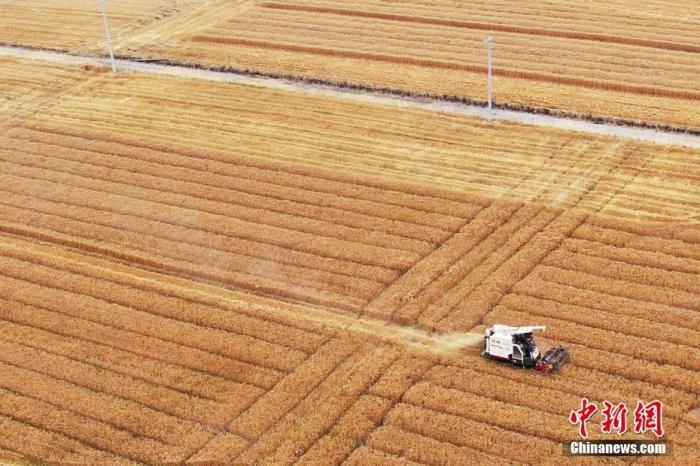 5月28日,收割机在江苏句容郊外田间收割小麦。眼下正值夏收时节,当地农民纷纷抓住有利天气抢收小麦。(无人机拍摄) 中新社记者 泱波 摄