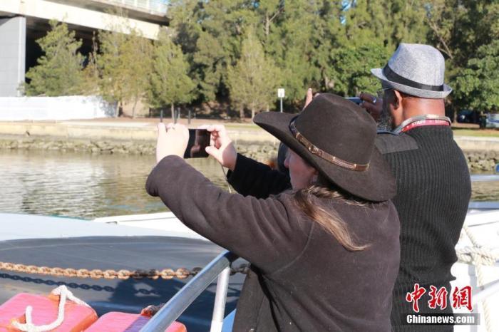 当地时间6月20日,澳大利亚悉尼市风和日丽,民众利用周末在帕拉马塔河(Parramatta River)享受水上游乐时光。