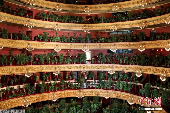 """当地时间6月22日,西班牙巴塞罗那,受新冠肺炎疫情的影响,巴塞罗那的利赛奥大剧院重新开放,举办了一场特殊的音乐会。剧院里的观众席""""坐满""""植物,此举是为了以提高人们对观众重要性的认识。"""