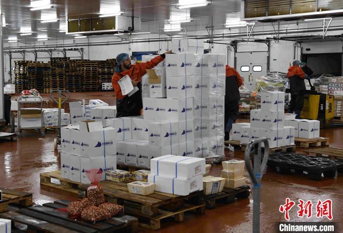 新冠肺炎疫情在法国已经有所缓解,法国企业纷纷推进复工复产。<a target='_blank' href='http://www.chinanews.com/'>中新社</a>记者独家探访法国海鲜捕捞与加工的领军企业Mericq集团,该集团已恢复正常生产,期待拓展中国市场,让中国消费者能够有机会品尝更多来自法国等国家的高级海鲜产品。Mericq集团总部位于法国南部新阿基坦大区洛特-加龙省省会阿让。该城人口3万多人,是洛特-加龙省人口最多的城市。Mericq集团拥有员工700多人,是阿让本地最重要的企业。图为当地时间6月26日,工作人员正在清点海鲜处理车间的水产品。 <a target='_blank' href='http://www.chinanews.com/'>中新社</a>记者 李洋 摄