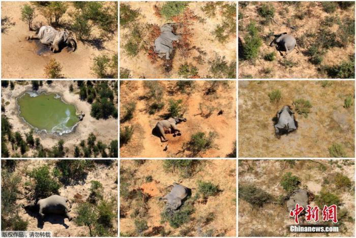非洲数百大象神秘死亡,专家:可能会威胁人类健康