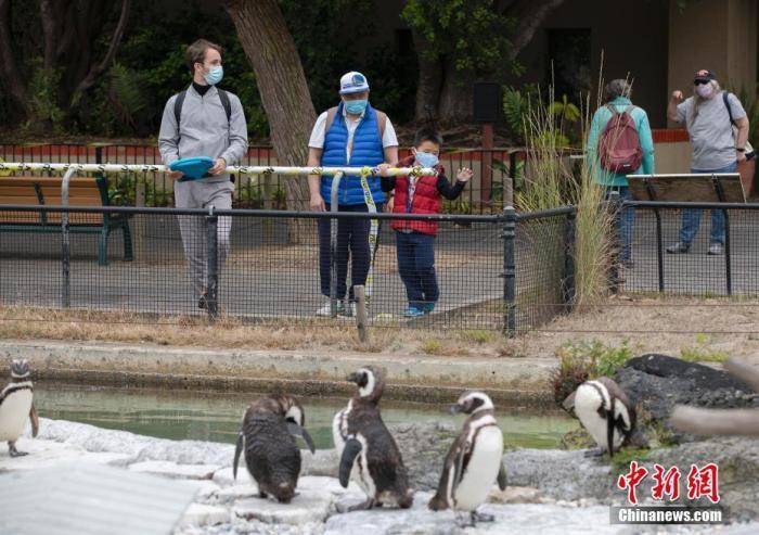 """内地时间7月13日,旅客在美国加利福尼亚州旧金山动物园旅行。当日,这家动物园在封锁近四个月后从头开放。旅客需提前预约,在游览期间要与他人保持""""社交间隔"""",两岁以上的旅客需佩带口罩。 /p平心在线记者 刘关关 摄"""