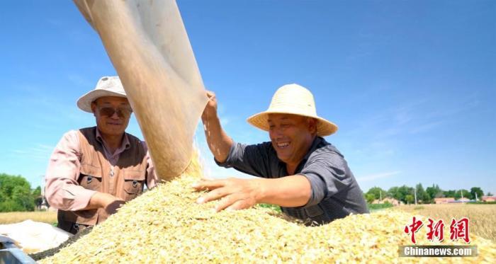 资料图:农民进行小麦脱粒。 宗瑛 摄