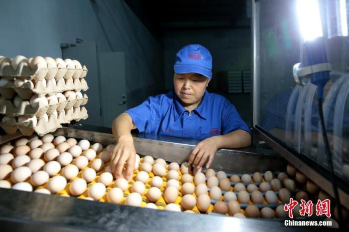 7月21日,社区居民在鸡蛋加工车间做事。陕西省商洛市山阳县富桥社区共安放易地扶贫搬迁对象3000余人。该社区依托己建成的金鸡扶贫产业园、和丰阳光食用菌产业园、电子设备和肠衣护套加工厂就近安放就业580人,其中拮据做事力320人,协助了不少出不了远门又必要照顾老人孩子的妇女就业。 中新社记者 张远 摄