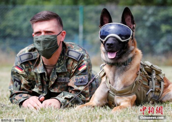 当地时间2020年7月24日,德国Daun,德国训练军犬嗅检新冠病毒感染者,狗狗戴着防晒和防尘墨镜亮相。