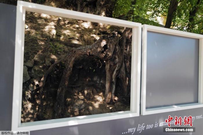 文森特·梵高创作最后一幅作品《树的根》创作地被隔离装置保护起来。
