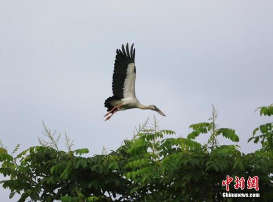 Chinese scientists find new evidence of birds' reproductive evolution