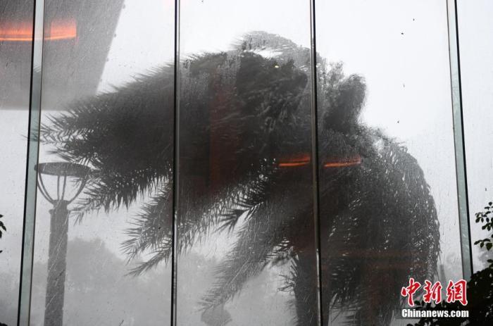 """资料图:8月4日,乐清一酒店的景观树在台风中大幅摇动。当日3时30分许,今年第4号台风""""黑格比""""(台风级)在浙江乐清沿海登陆,登陆时中心附近最大风力有13级(38米/秒)。中新社记者 王刚 摄"""