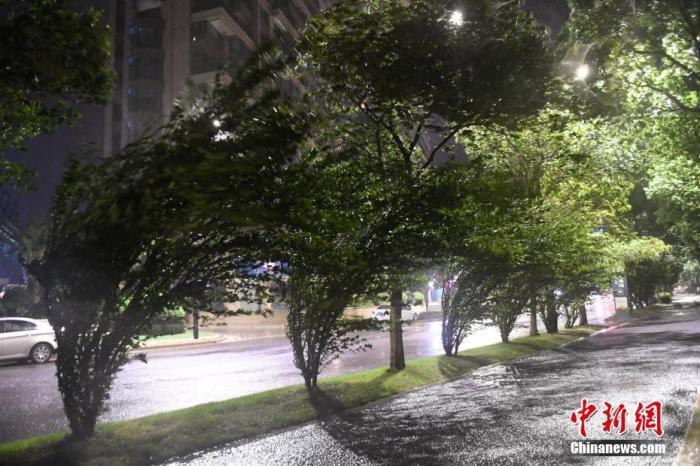 """资料(图):8月4(日),温州(乐)清行道树被大风吹歪。当日,今年第4号(台)风""""(黑)(格)(比)""""逼近浙江(温)(州)乐清,受此影响,乐(清)沿(海)(区)域迎来疾风骤雨。中新社(记)(者) (王)刚 摄"""