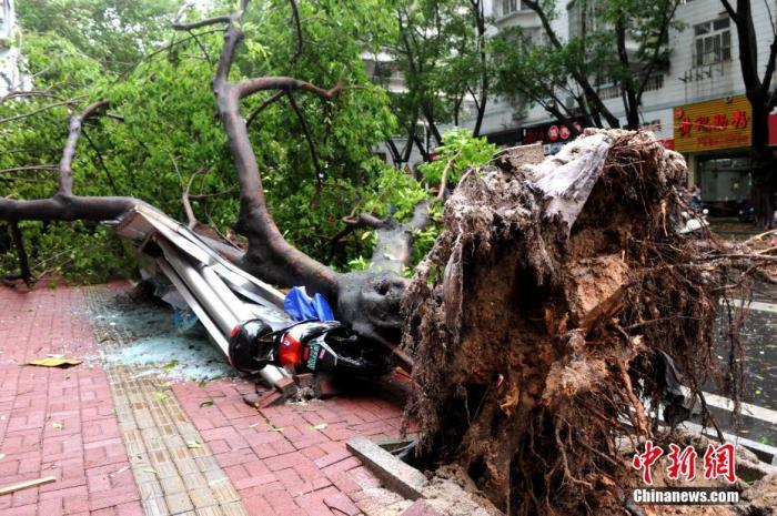"""台风""""米克拉""""袭击致福建漳州直接经济总损失超7亿元"""