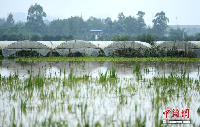 今年中国洪涝灾害共造成7047.1万人次受灾