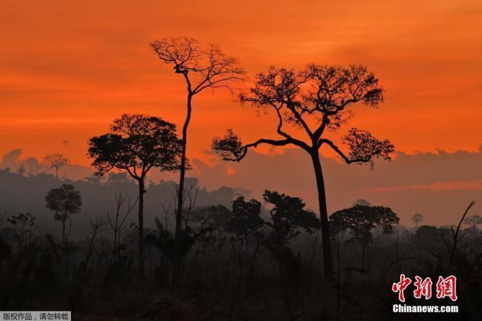 当地时间2020年8月16日,巴西帕拉州新普雷索以南的亚马孙雨林保护区火灾持续,浓烟滚滚。