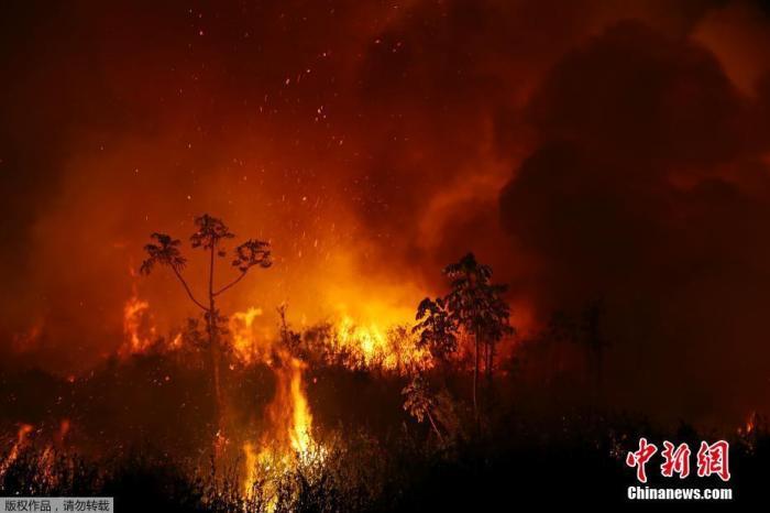 美洲虎在巴西湿地大火中烧伤 治疗一个多月后重返野外