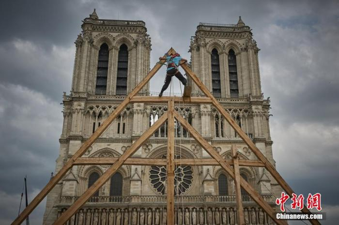 为重建巴黎圣母院塔尖 法国全力搜寻百年橡树