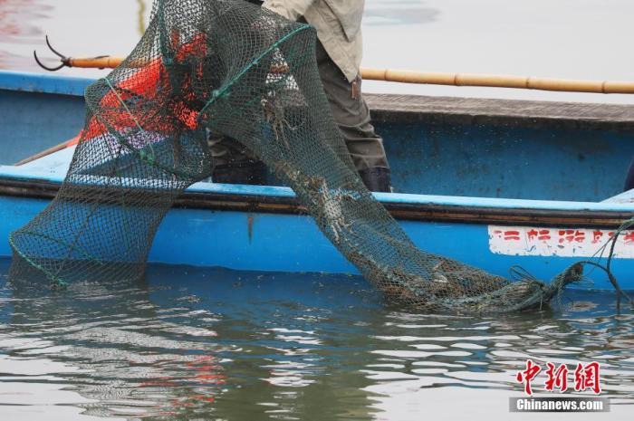 9月21日,养殖户在苏州阳澄湖捕捞大闸蟹。当日,江苏苏州阳澄湖大闸蟹开捕。中新社记者 泱波 摄