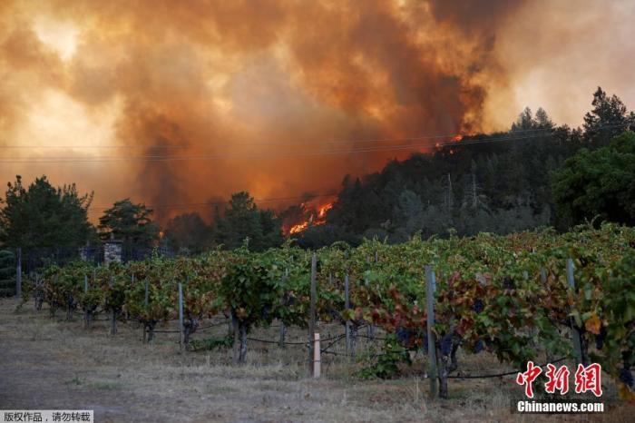 图为从附近葡萄园眺望火场。