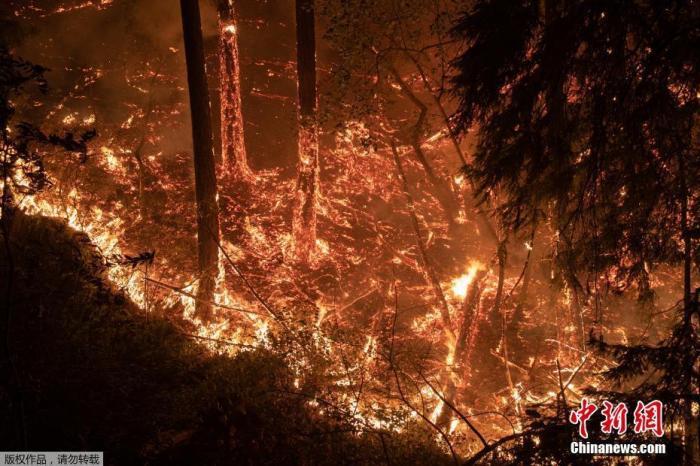 """当地时间9月28日,美国加州卡利斯托加市,山火持续肆虐。图为""""玻璃""""大火沿着山坡燃烧。"""