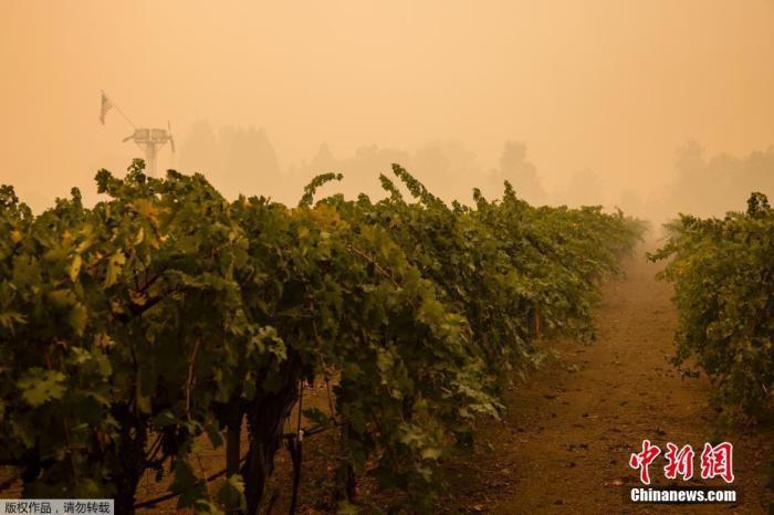 """当地时间2020年9月30日,美国加州纳帕谷,蔓延速度最快的""""玻璃大火""""(Glass Fire)肆虐纳帕著名的葡萄酒产区,已造成3人死亡,葡萄园区遍地废墟。"""