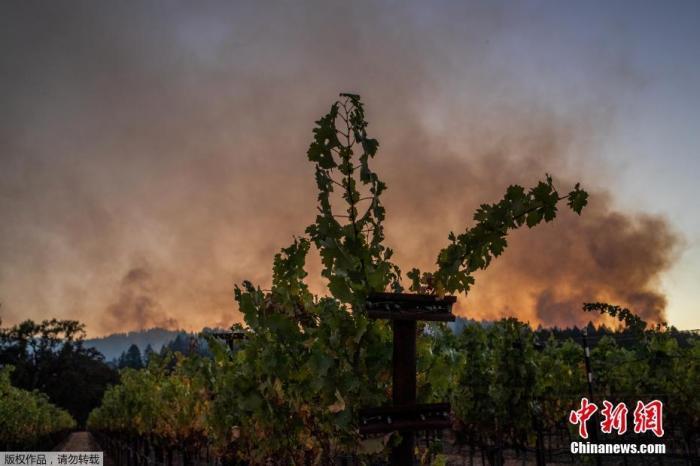 美加州8000多起野火造成31人死 逾5万用户或断电图片