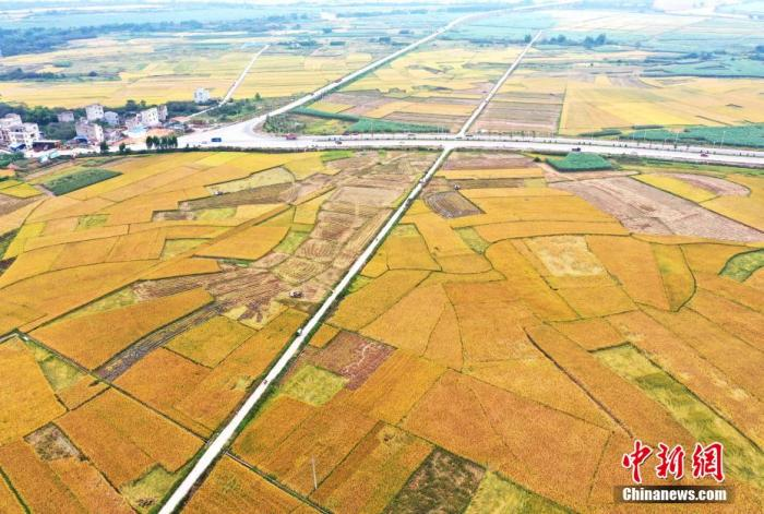 农业农村部:自主选育粮食品种种植面积占比超95%