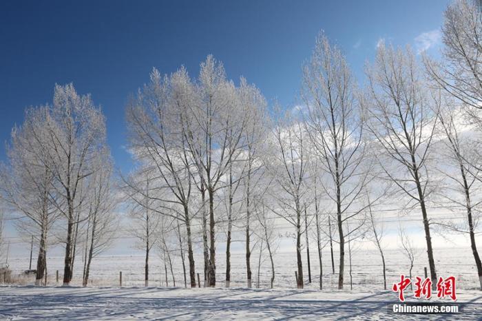 资料图:新疆雾凇晶莹剔透,美不胜收。 李晓娟 摄