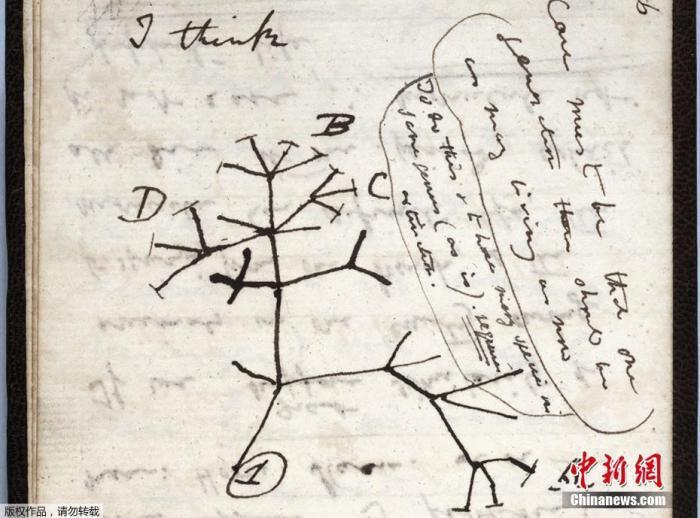 """当地时间11月24日,英国剑桥大学图书馆表示,英国生物学家、进化论创立者达尔文的两本珍贵笔记本,据信遭窃。笔记本2001年就曾被列为遗失,但馆方认为其只是被错放在了馆内某处。据介绍,笔记本内有关于进化论的开创性想法,价值不菲。图为遗失笔记上1837年绘制的""""生命之树""""草图。"""