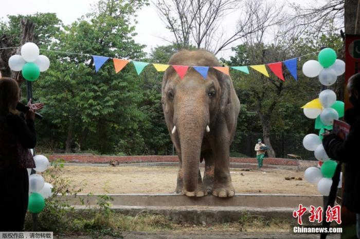 欧洲杯在即 德国动物园大象将预测德法大战结果