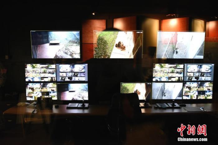图为11月22日拍摄的华盛顿国家动物园熊猫馆的实时视频监控室。 中新社记者 陈孟统 摄