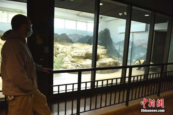 """8月21日,大熊猫""""美香""""在美国华盛顿国家动物园诞下一只雄性幼崽。园方日前为其取名""""小奇迹"""",11月29日它即将迎来出生第100天。图为11月22日华盛顿国家动物园熊猫饲养员马蒂・迪里(右)和大熊猫""""美香""""。 中新社记者 陈孟统 摄"""