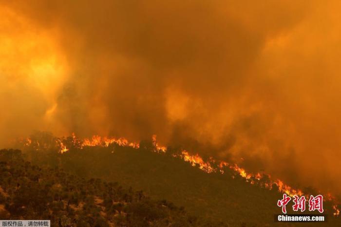 别管封锁令!澳珀斯附近林火失控 居民受促撤离(图)图片