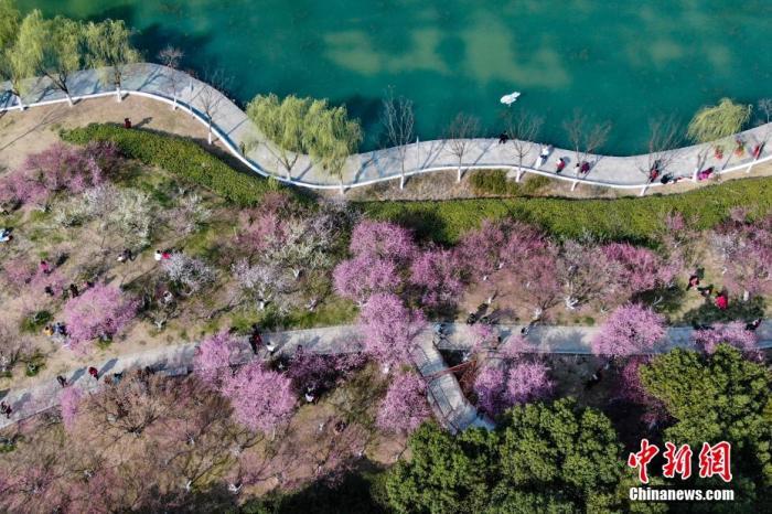 资料图:游客在花海漫步赏梅。 张娅子 摄