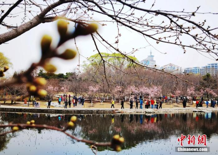 春花观赏季来临 北京市民游客公园踏青赏花