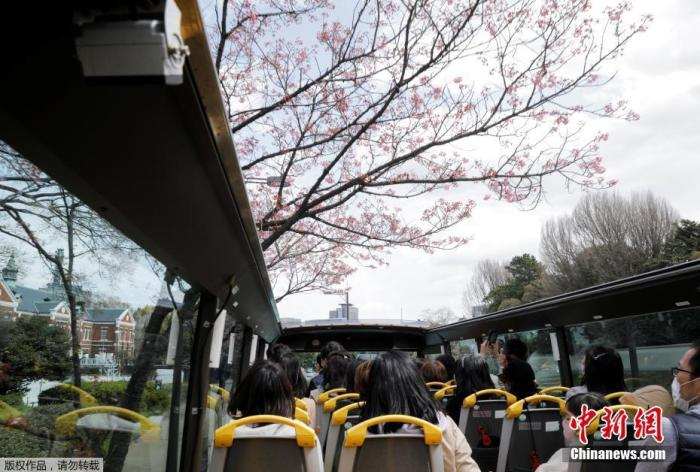 当地时间3月22日,日本东京解除紧急状态,旅游业逐步恢复,民众戴口罩搭乘观光车赏樱花。