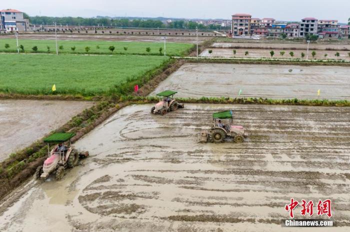 原料图:各类农机设备正在稻田里进走死板化作业。 刘力鑫 摄