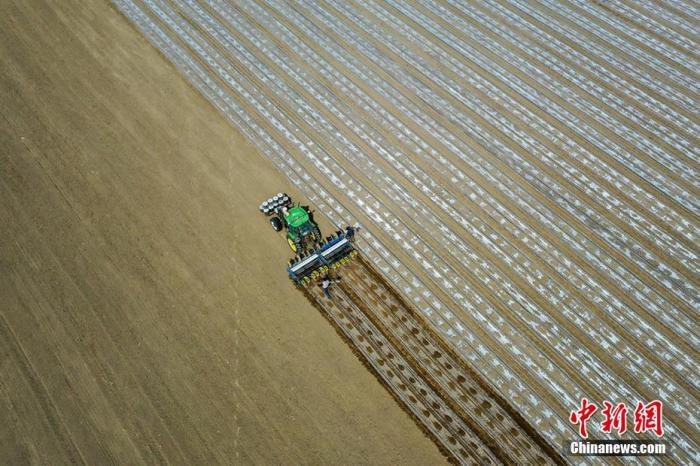4月7日,在新疆巴州博湖县博斯腾湖乡库代力克村棉田里,棉农采用机械开足马力播种棉花。年磊 摄