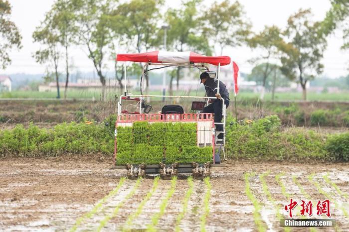 资料图:图为农民驾驶农机开展插秧作业。 刘力鑫 摄