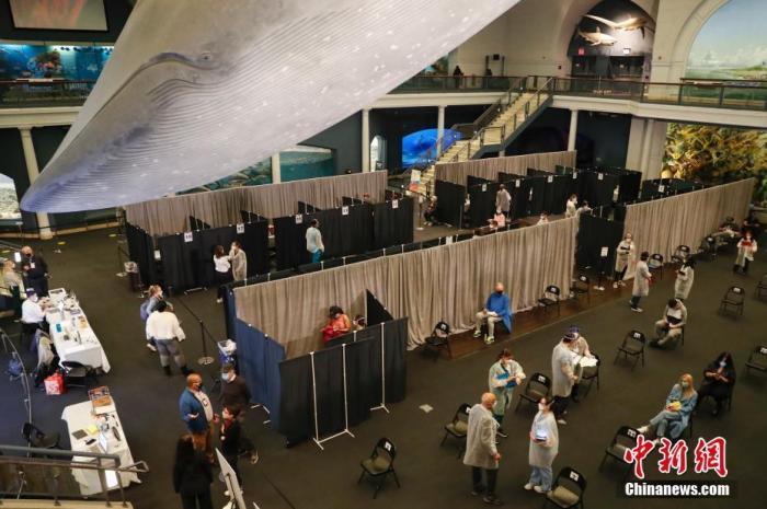 当地时间4月23日,位于纽约的美国自然历史博物馆开辟海洋馆为新冠疫苗接种点,为18岁以上的纽约居民接种新冠疫苗。 中新社记者 谭宏伟 摄