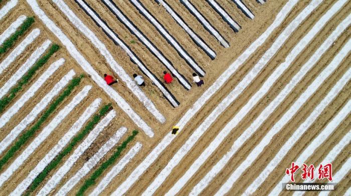第三次全国国土调查:2019年末全国耕地19.18亿亩图片