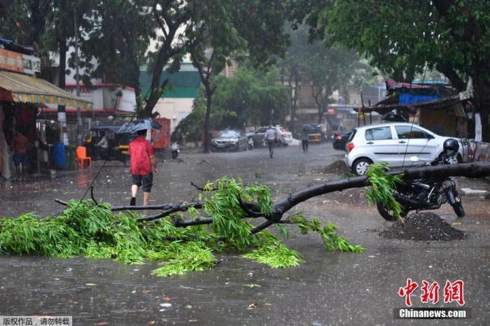 """资料图:当地时间5月17日,印度孟买,热带气旋""""陶特""""带来强风与降雨,树木倒伏在充满积水的街道上。"""