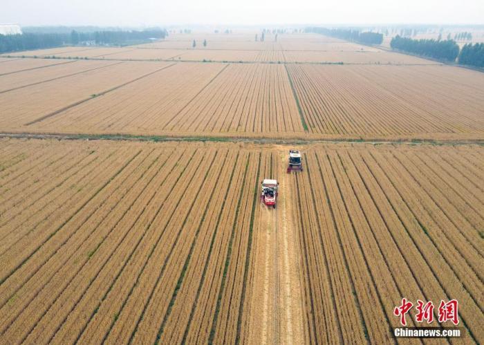 资料图:联合收割机抢收小麦。(无人机照片) <a target='_blank' href='http://www.chinanews.com/'>中新社</a>记者 毛建军 摄