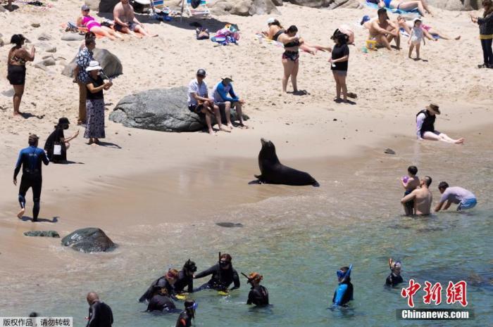 资料图:当地时间6月10日,在新冠肺炎疫情期间,美国加州旅游业开始复苏,大批游客前往海边享受阳光。