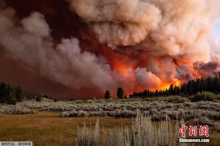 """当地时间7月8日,美国加州,贝克沃斯综合火灾一部分的""""糖火""""在普卢马斯国家森林蔓延。图为山火烟雾漫天。"""