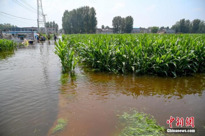 河南洪涝灾害致农作物受灾1450万亩 灾情仍在发展