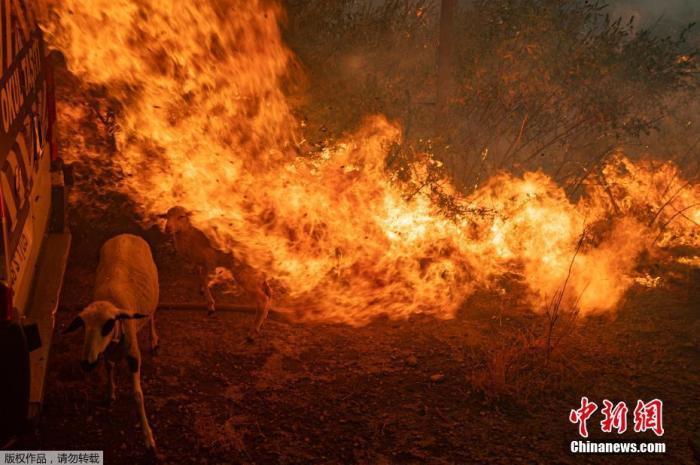 地中海地区热浪袭击野火狂烧 专家称未来将更频繁