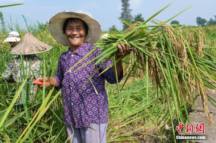 农业农村部:今年粮食产量将再创历史新高