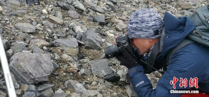 中国采集队在珠峰6200米地带成功采到植物种子