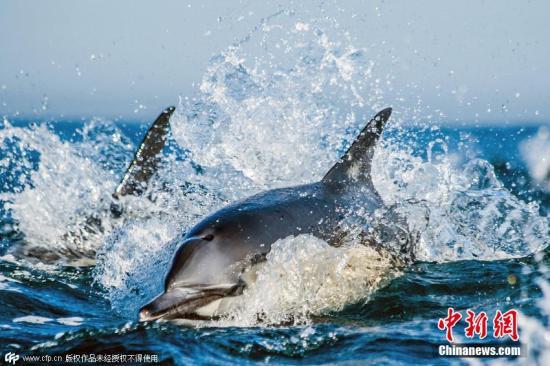 资料图:海豚。图片来源:CFP视觉中国