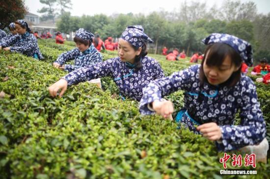 中国内地进口茶叶增速远超出口 均价已超过每公斤5美元